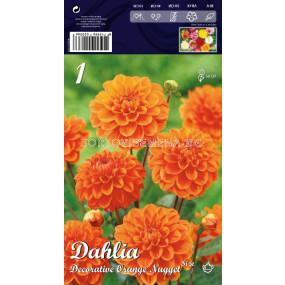 Далия (Dahlia) Decorative Orange Nugget (ниска)