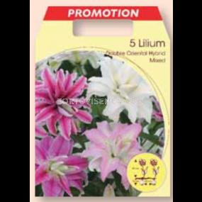 Лилиум двоен ориентал / Lilium double oriental mixed / 1 оп ( 5 бр )