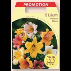 Лилиум тромпет микс / Lilium trumpet mixed / 1 оп ( 5 бр )
