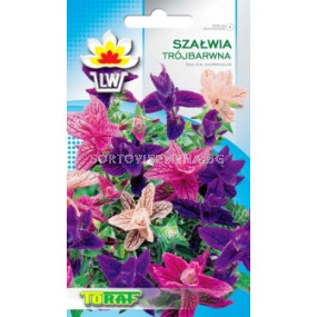 Салвия (Градински чай) - трицветна. Аграра ООД. Сортови семена Дар