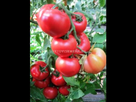 Сорт домати Хъни Муун F1. Аграра ООД. Сортови семена Дар.