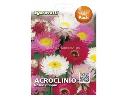 Акроклиниум - SG - Acroclinium - SG
