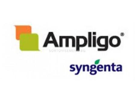 Амплиго