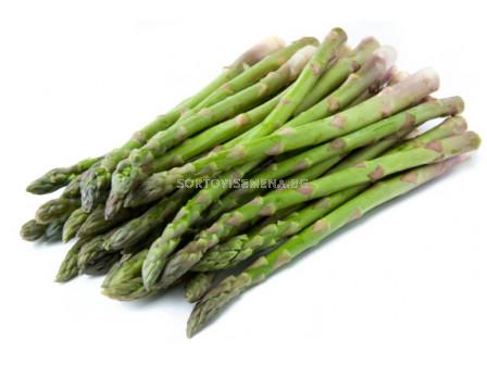 Аспержи (Asparagus) - коренища