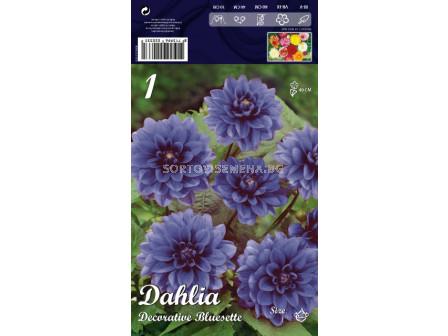 Далия (Dahlia) Decorative Bluesette (ниска)