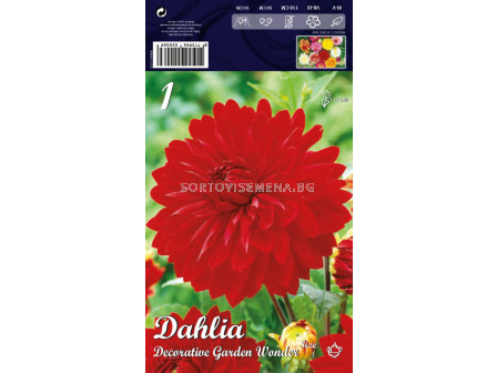 Далия Decorative Garden Wonder - Dahlia Decorative Garden Wonder