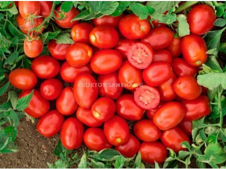 Семена за Домати Керо F1 ( Kero F1 ) Esasem-1 000 р