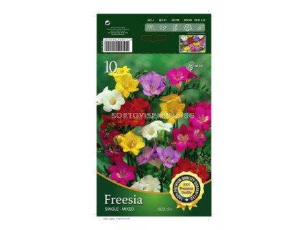Фрезии Микс- 10 бр - Freesia Mix - 10 pieces