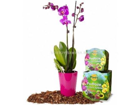Комплект за орхидея-почва + саксия