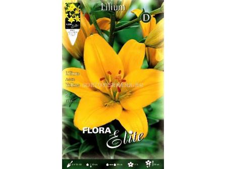 лилиум азиатски Жълт - lilium asiatic Yellow