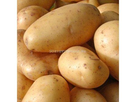семе картофи Аида - 5кг