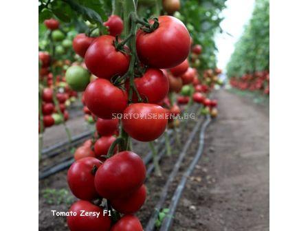 Семена домати Зерси F1  - tomato Zersy F1  - 2