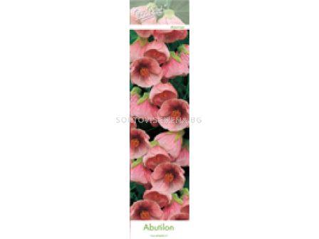 Абутилон (Abutilon) Розов