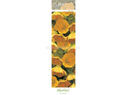 абутилон Жълт (Flowering Maple)
