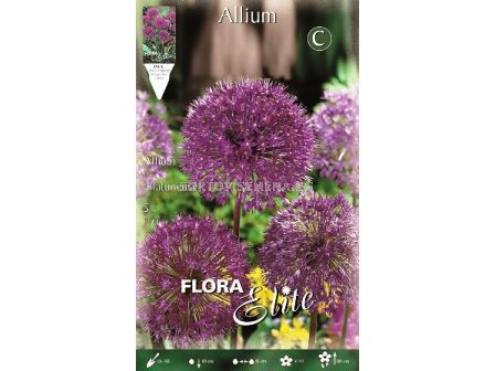 Декоративен лук Aflatunense - Allium Aflatunense