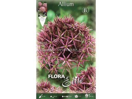 Декоративен лук Allium Christophii