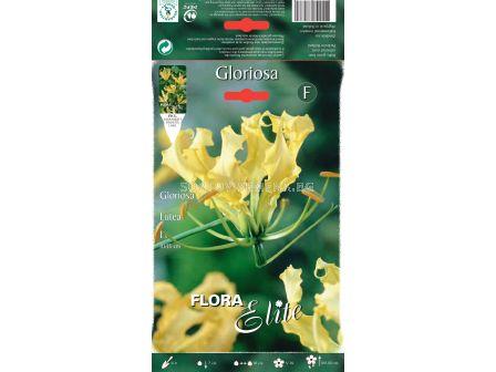Глориоза Лутея - Gloriosa Lutea