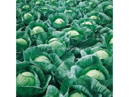 Семена зеле Вестри F1 - 2 500 сем