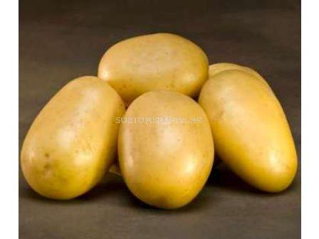 картофи Лината