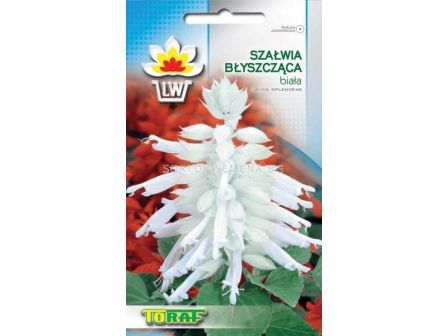 Салвия – бяла (10 семена)