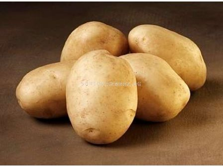 семе картофи Ломбардо