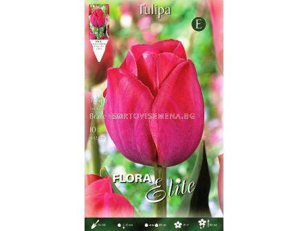 Лале (Tulip) Triumph Brave Heart