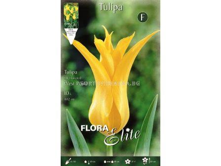 Лале (Tulip) West Point