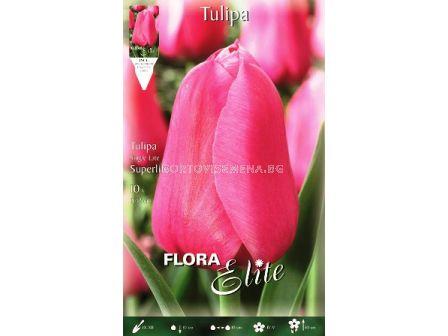 Лале (Tulip) Superlife