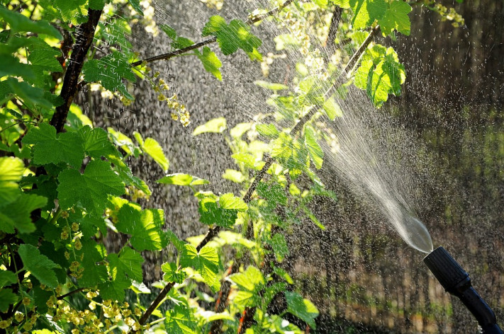 Биоинсектициди – силна защита без вреда