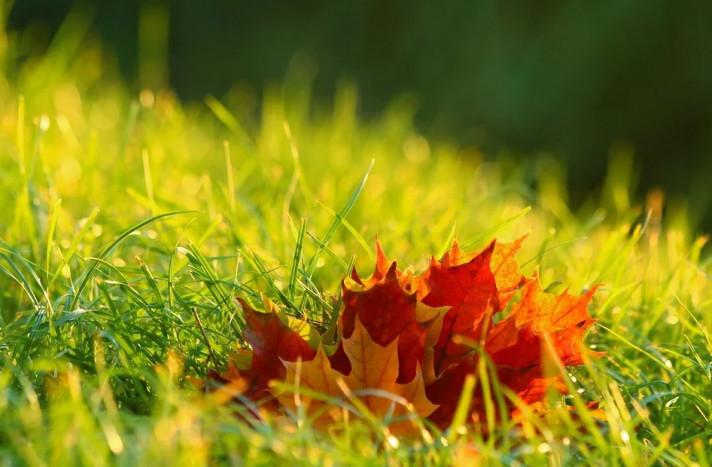 Есенното торене – как и защо?