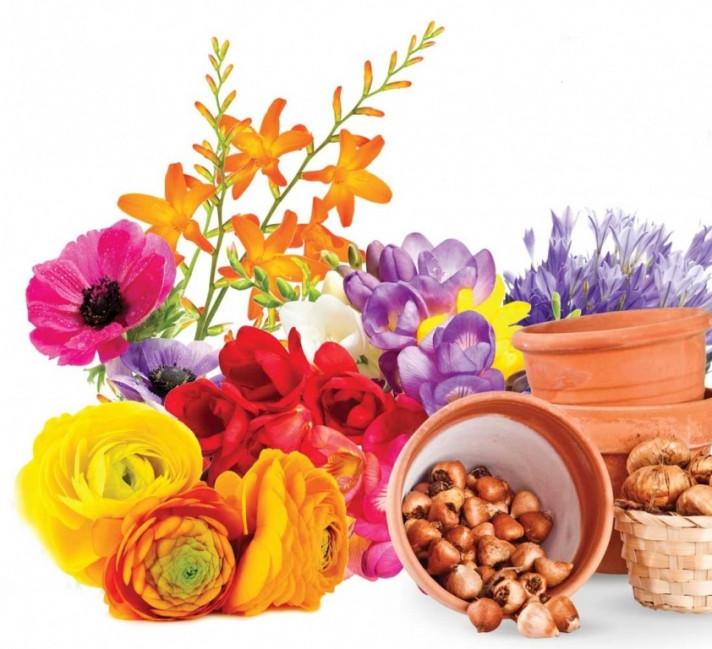 Красиви, шарени цветя и луковици