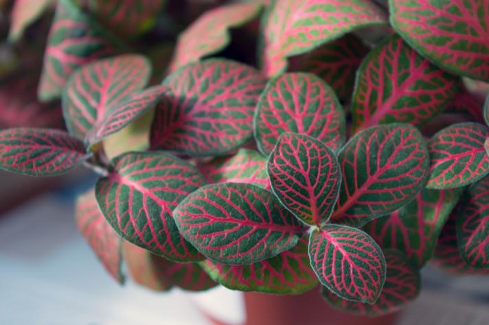 Стайно растение