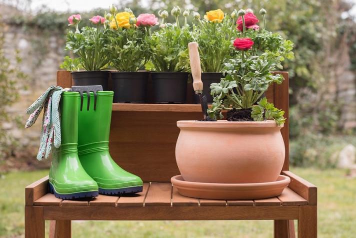 Разсади на шарени цветя, градина