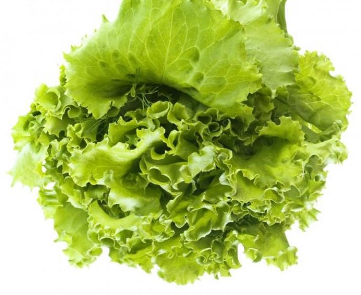 Прясна зелена салата. Аграра ООД. Сортови семена Варна