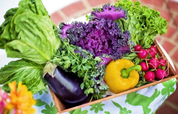 Семена за зеленчуци на Токита
