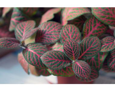 Грижи за стайните растения