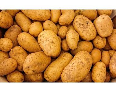 Как правилно да подхранваме картофите?