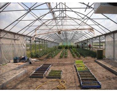 Как да подхраним изтощената почва в оранжерията?