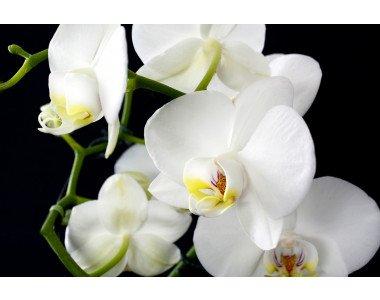 Как да пресадим орхидеята?