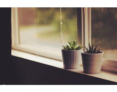 Зимата – труден период за стайните растения
