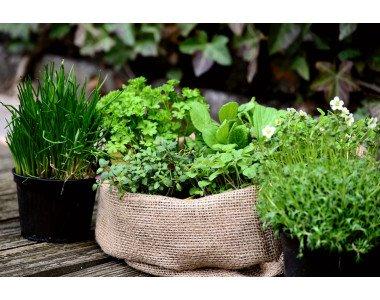 Отглеждане на билки в градината и у дома!
