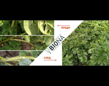 Биона срещу болести и вредители по зеленчуците