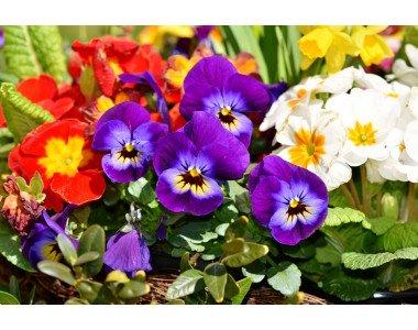 Залагане на семената на пролетните цветя