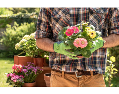 Купете разсади за цветя онлайн!