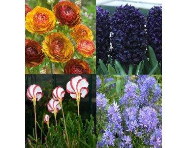 През есента Аграра внася уникални и нови за България цветя!