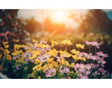 Торене на градинските цветя