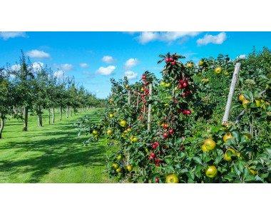 Специални тревни смеси за овощни градини и лозя