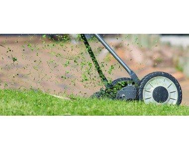 Жълти петна по тревните площи – какво да правим?
