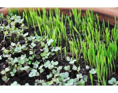 Микро растенията – полезни и вкусни