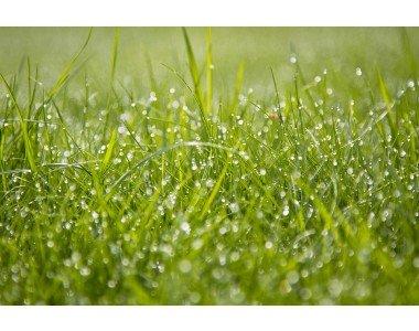 Подберете качествена и подходяща тревна смес